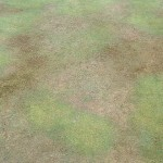 LDP, localised dry patch on bolwing green