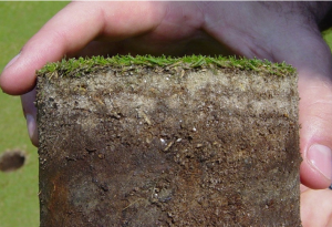 Distinct layers in soil profile sample