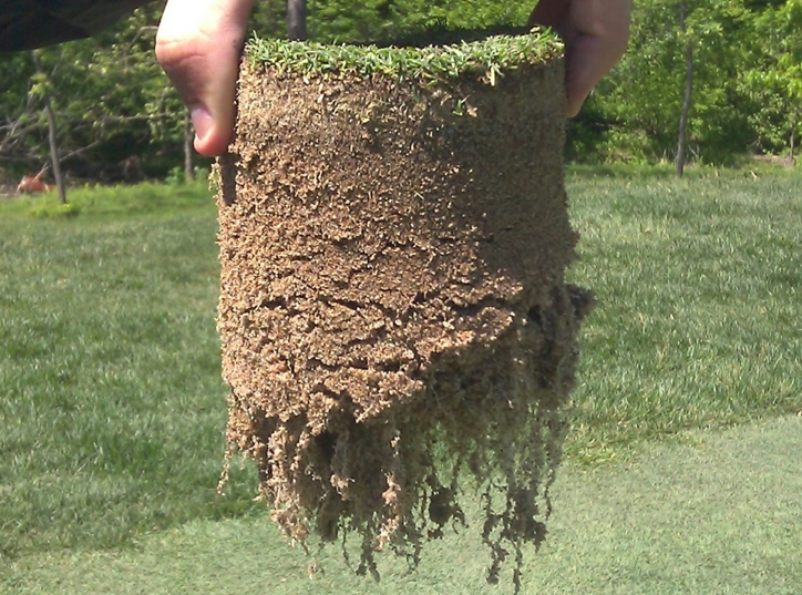 Root mass is important for a healthy bowling green