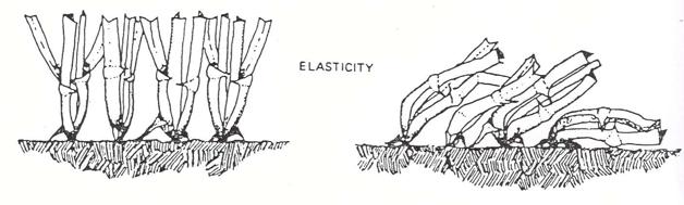 turf grass elasticity