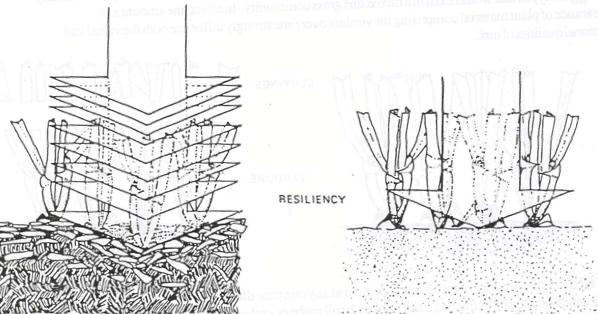 Turf Resiliency
