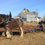 John Ploughing with Clydesdales