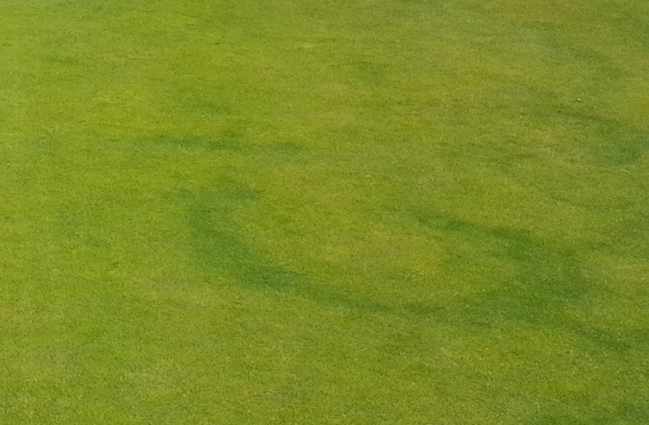 dealing with fairy ring in fine turf