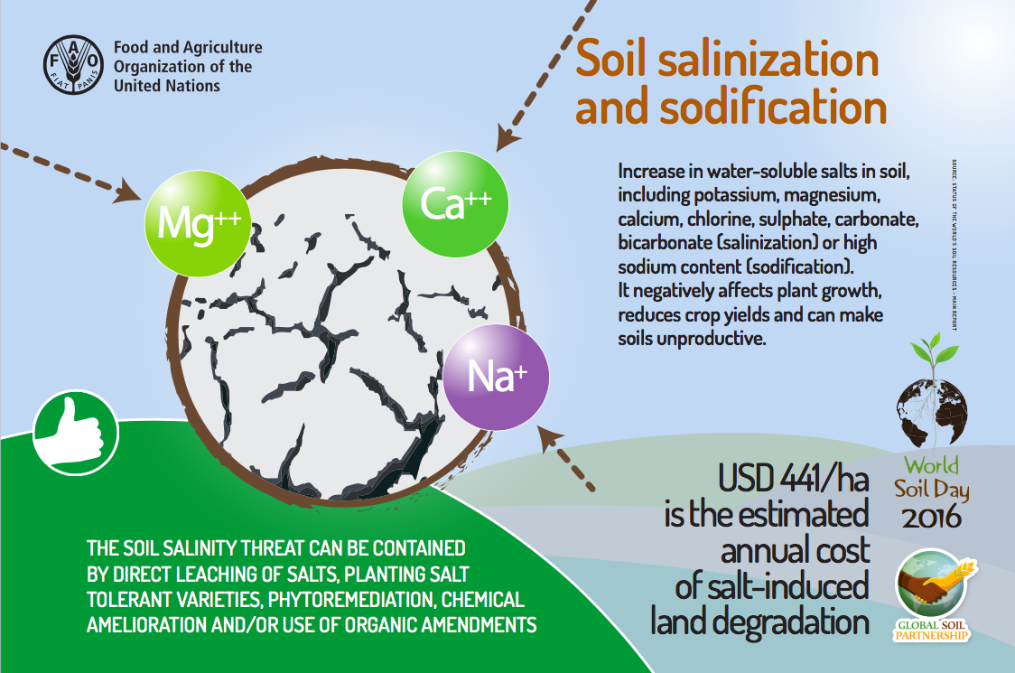 World soil day and natural greenkeeping bowls central for Soil salinization