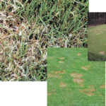 managing turf disease