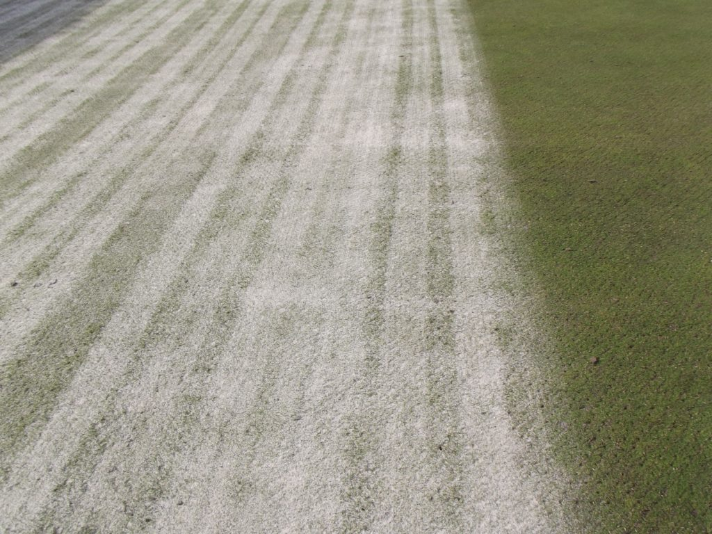 sand top dressing