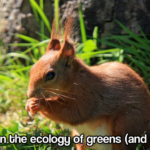 A note on the ecology of greens (and squirrels)