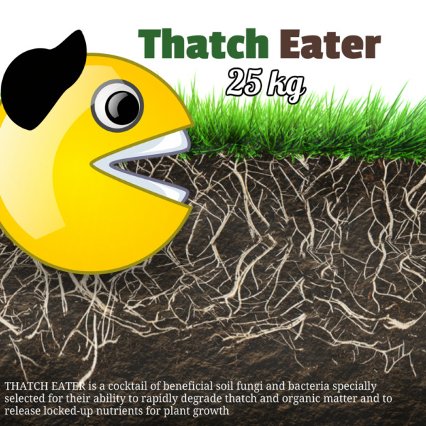 Thatch Eater