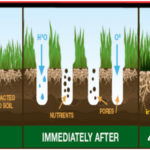 Bowling Green Maintenance Tips
