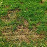 Bowling Green Maintenance Tips