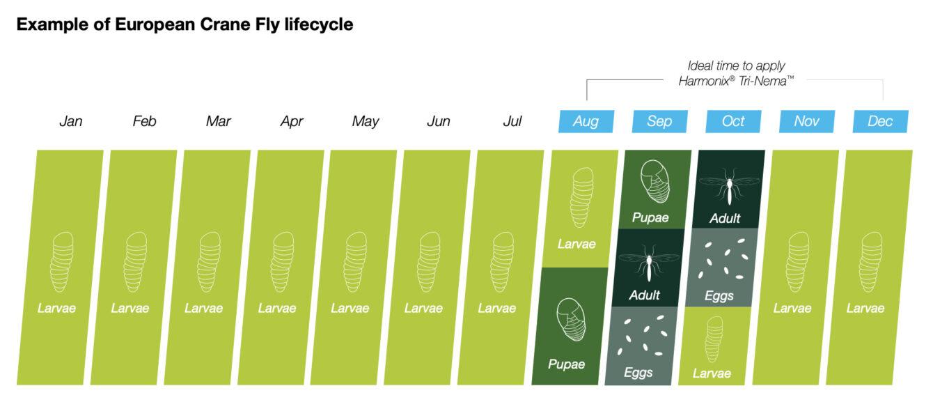 Leatherjacket Lifecycle